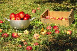 apples-1681978_960_720