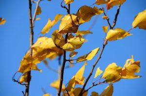 autumn-1202912_960_720
