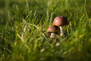 mushrooms-454172_960_720