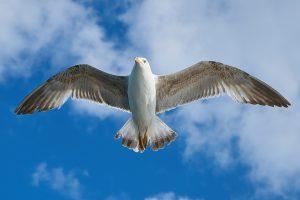 seagull-1511862_960_720